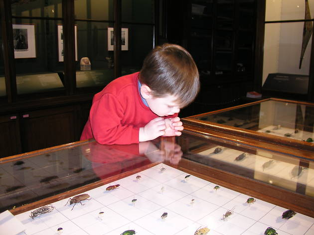 Child looking at insects inside museum