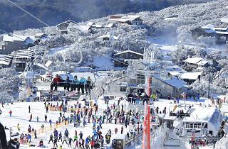 Mt Buller skiing