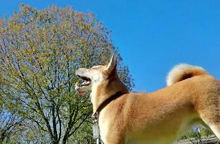 Kmimos, plataforma de cuidadores de mascotas