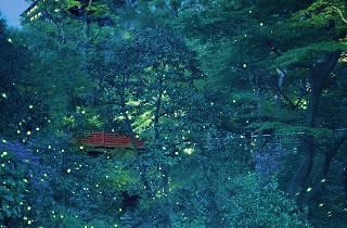 椿山荘ほたる