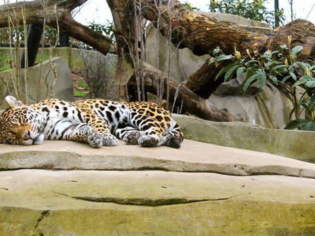 Gagnez vos places pour le parc zoologique de Paris !