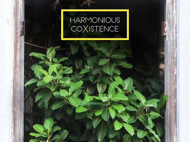George Town Festival: Harmonious Co-existence