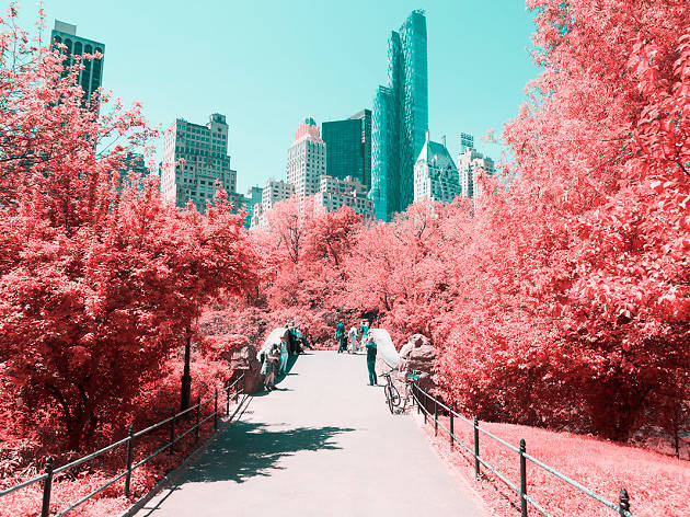 Check out these trippy photos of Central Park