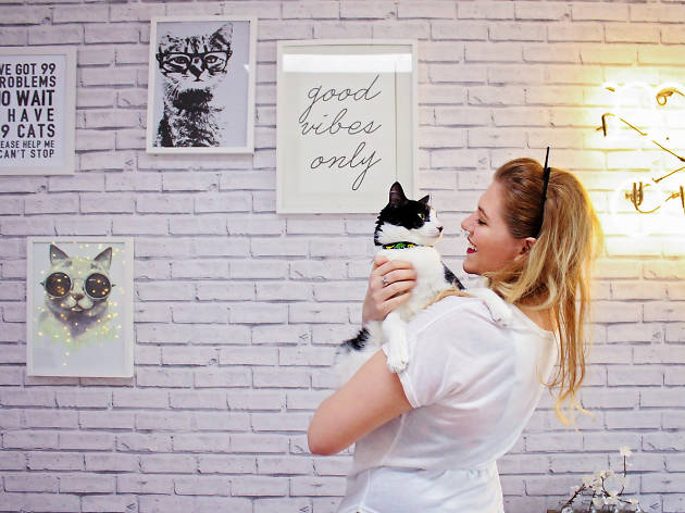 There's a cat café coming to LA—for real this time