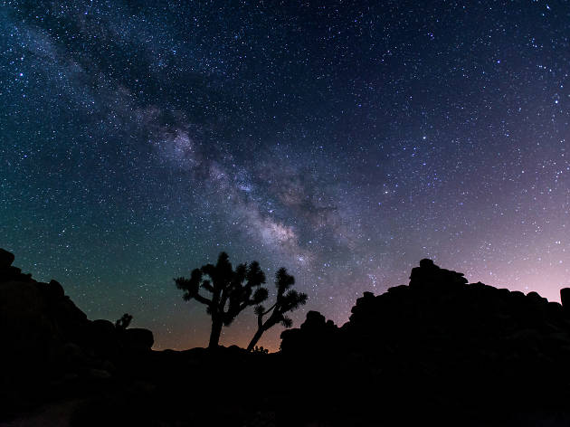 A Joshua Tree camping guide