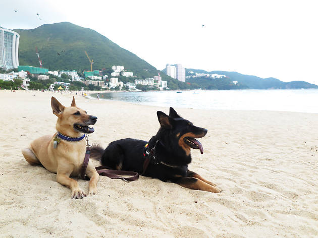 Hong Kong Dog Rescue Summer Barbecue Party