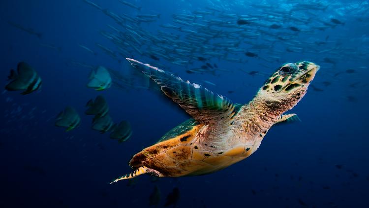 Turtle, Wildlife Photographer of the Year exhibition