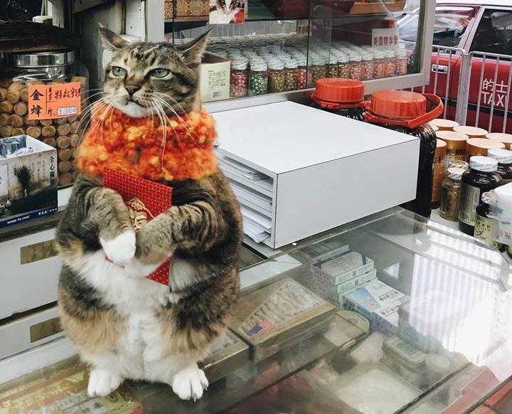 Wan Chai Cat