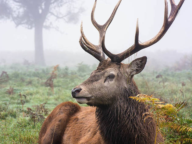 Deers in the mist: Instagrammer Paul Conner's dynamite pictures of Bushy Park