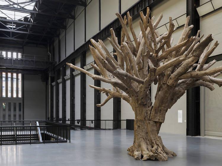A huge dead tree