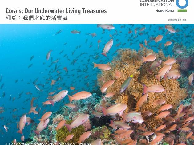 Corals: Our Underwater Living Treasures