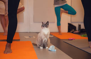 ME-OM: Yoga with Adoptable Cats