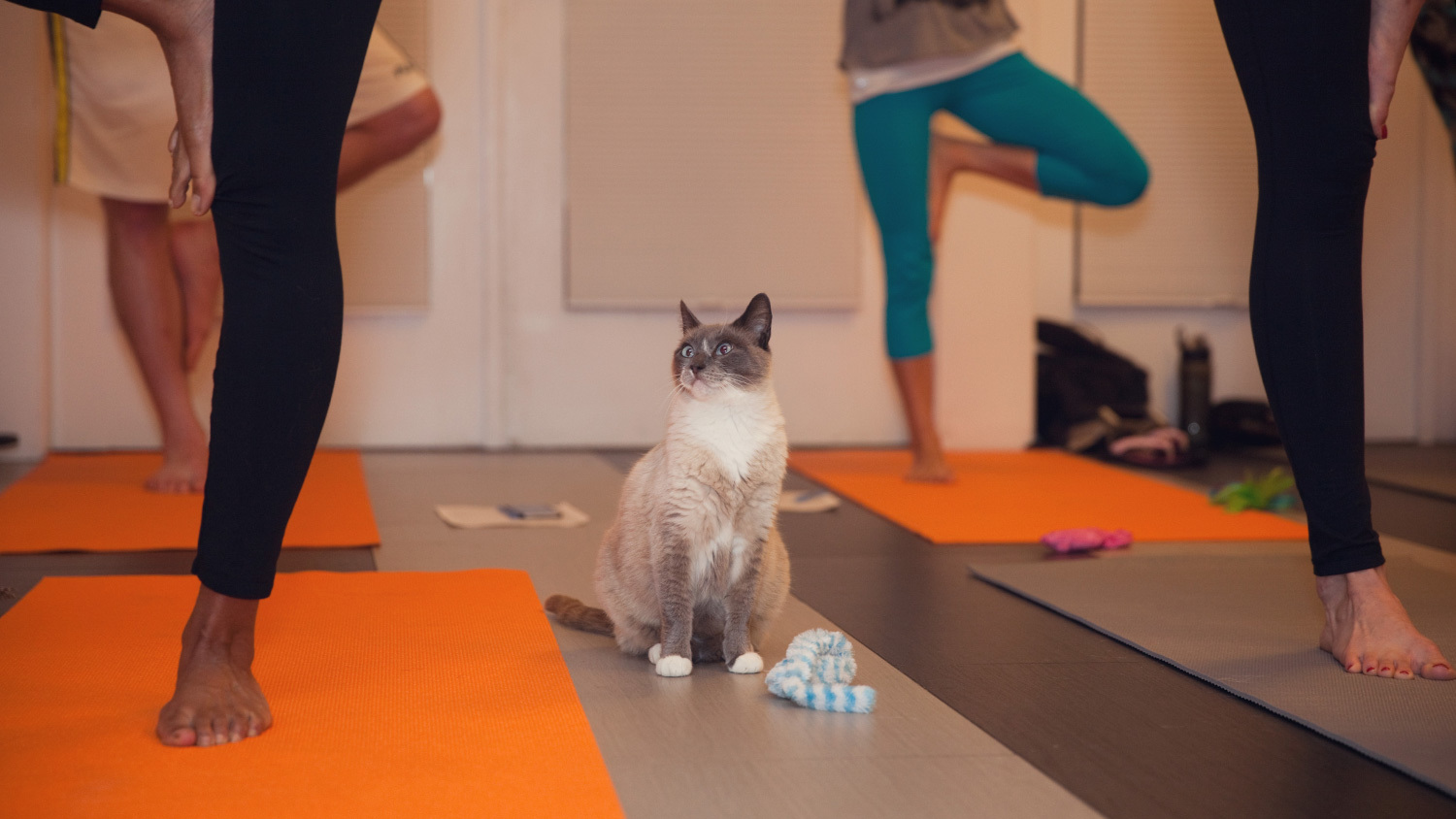 You can take a yoga class with adoptable cats—here's what it looks like