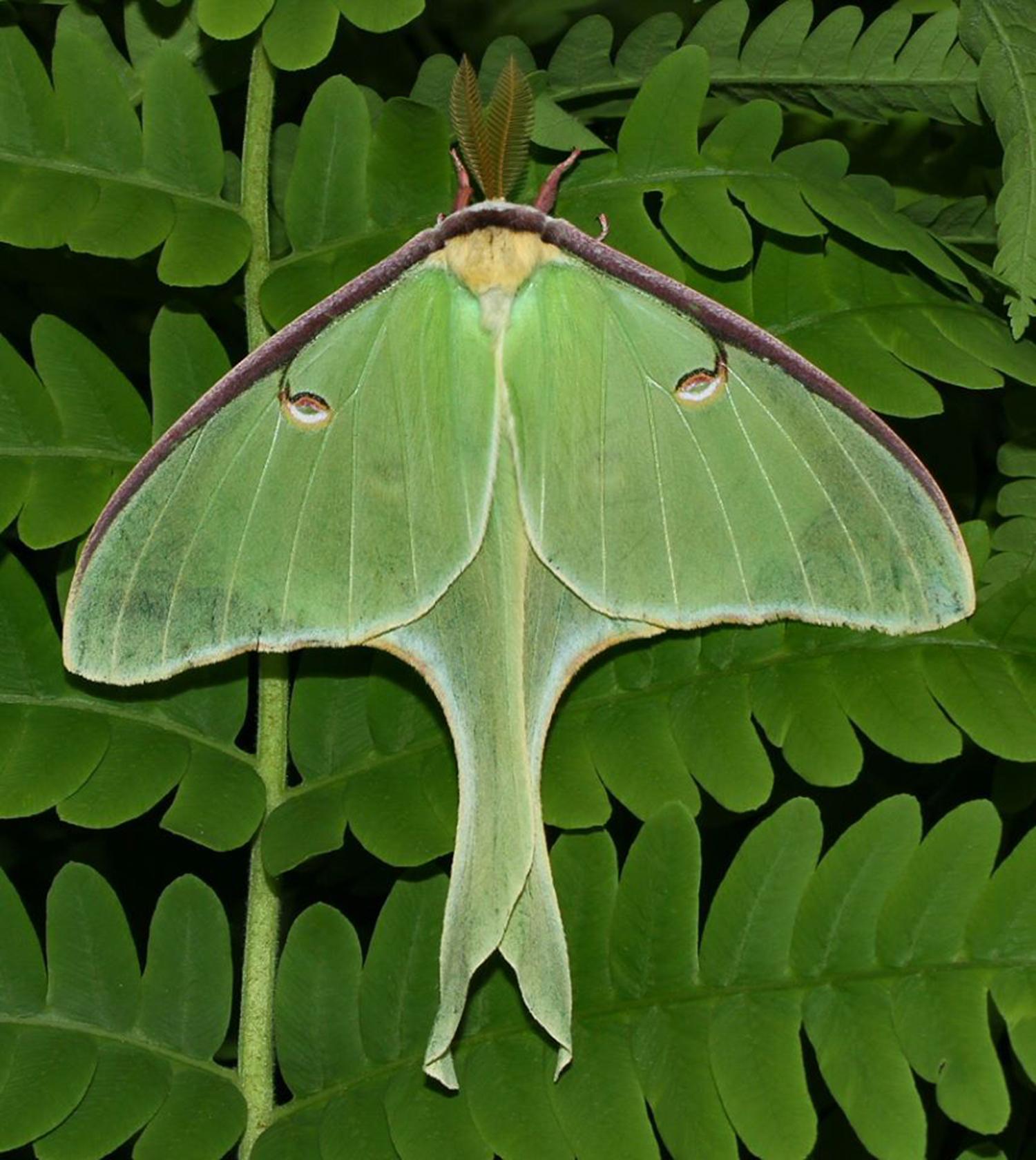 Moth Night (Snug as a Bug)