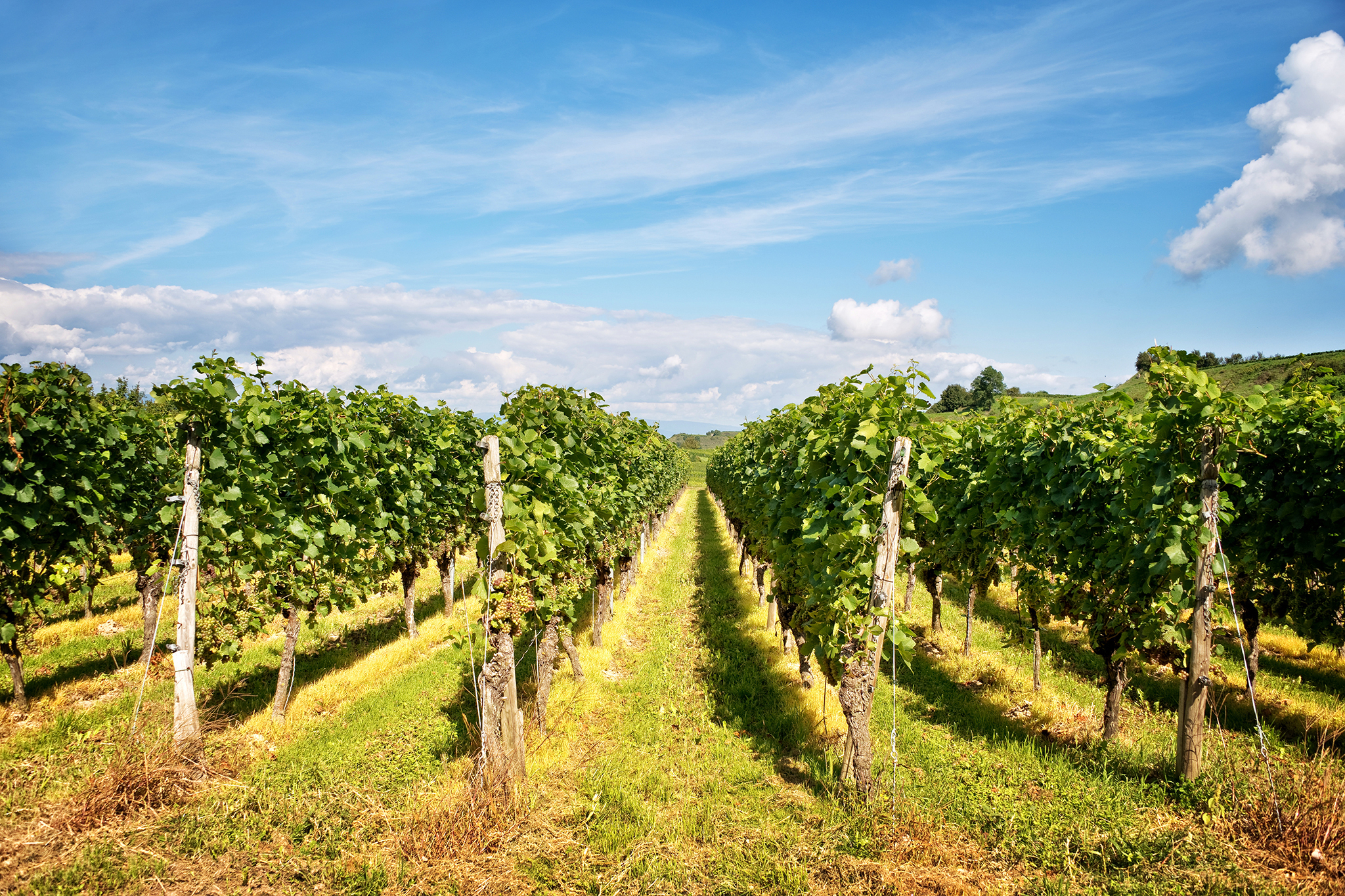 Best Winery Tours On Long Island