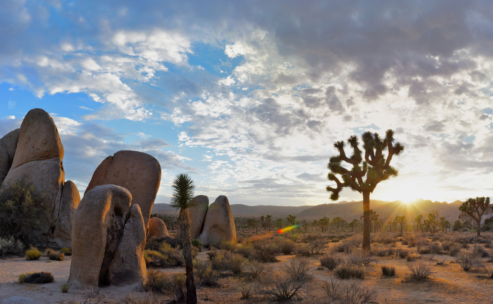 Top Joshua Tree things to do