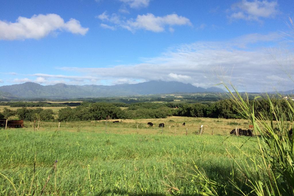 Kipu Ranch, Hawaii