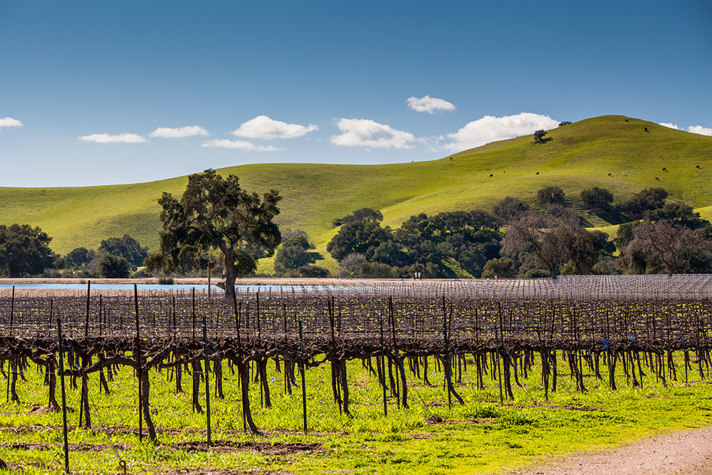 Firestone Vineyards, Los Olivos, California