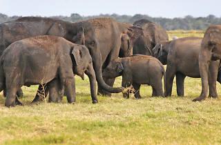 The 'Gathering' of gentle giants
