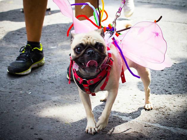 Las mascotas apoyando en la Marcha del Orgullo LGBTTTI en la CDMX