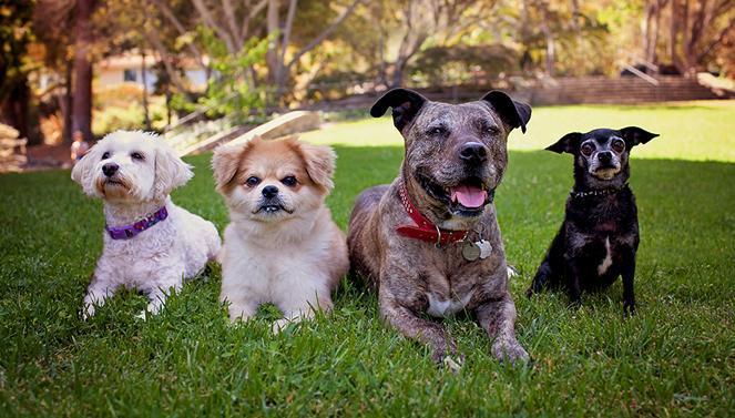 Pet adoption: Find your new best friend
