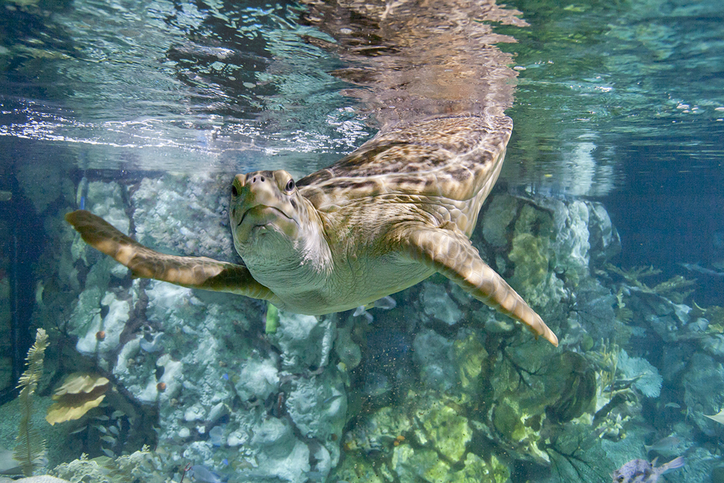 5 things you probably don't know about the animals at Shedd Aquarium