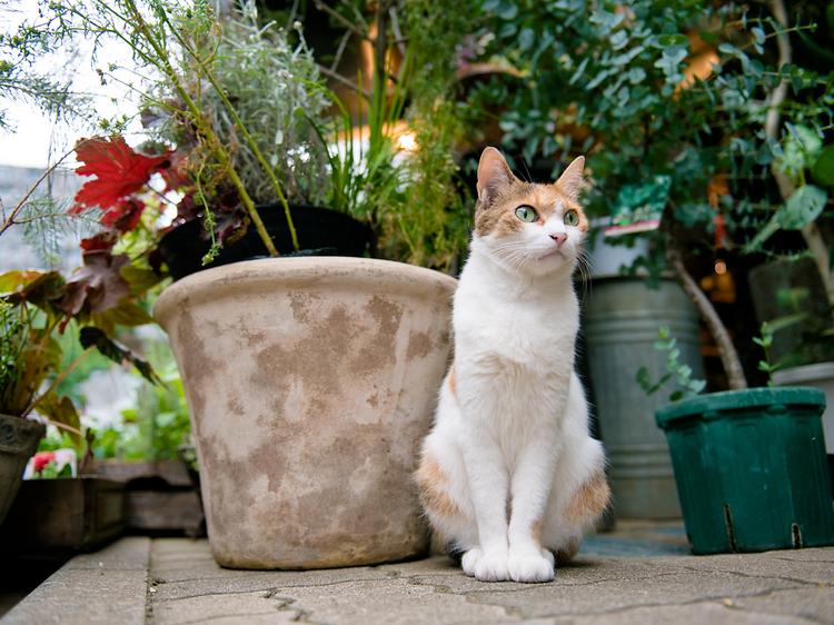 生まれ変わったら看板猫になる。