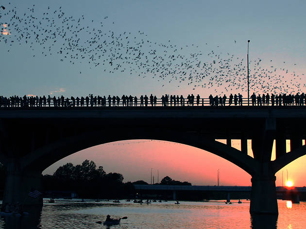 Bats at Congress Avenue Bridge
