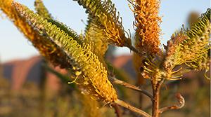 Spot native flora