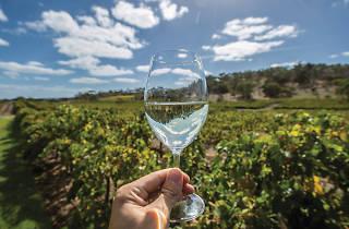 A vineyard in McLaren Vale