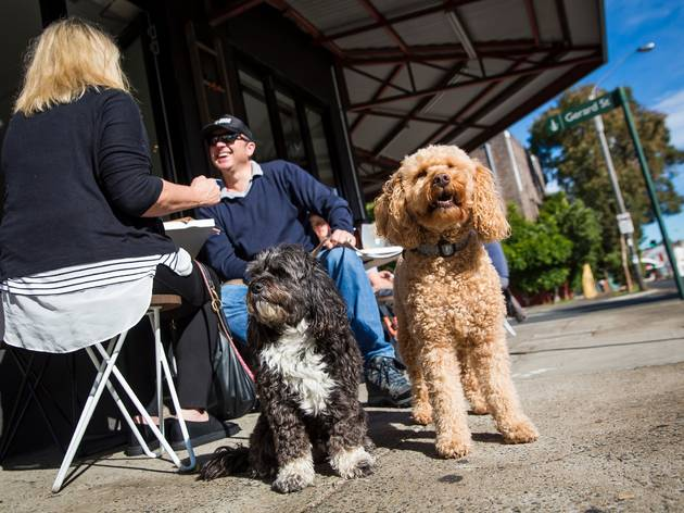 Dog-friendly cafes