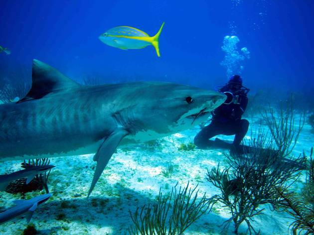 Screening: Shark Girl