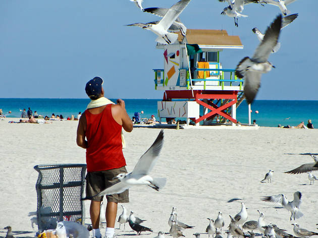 Bird feeder South Beach