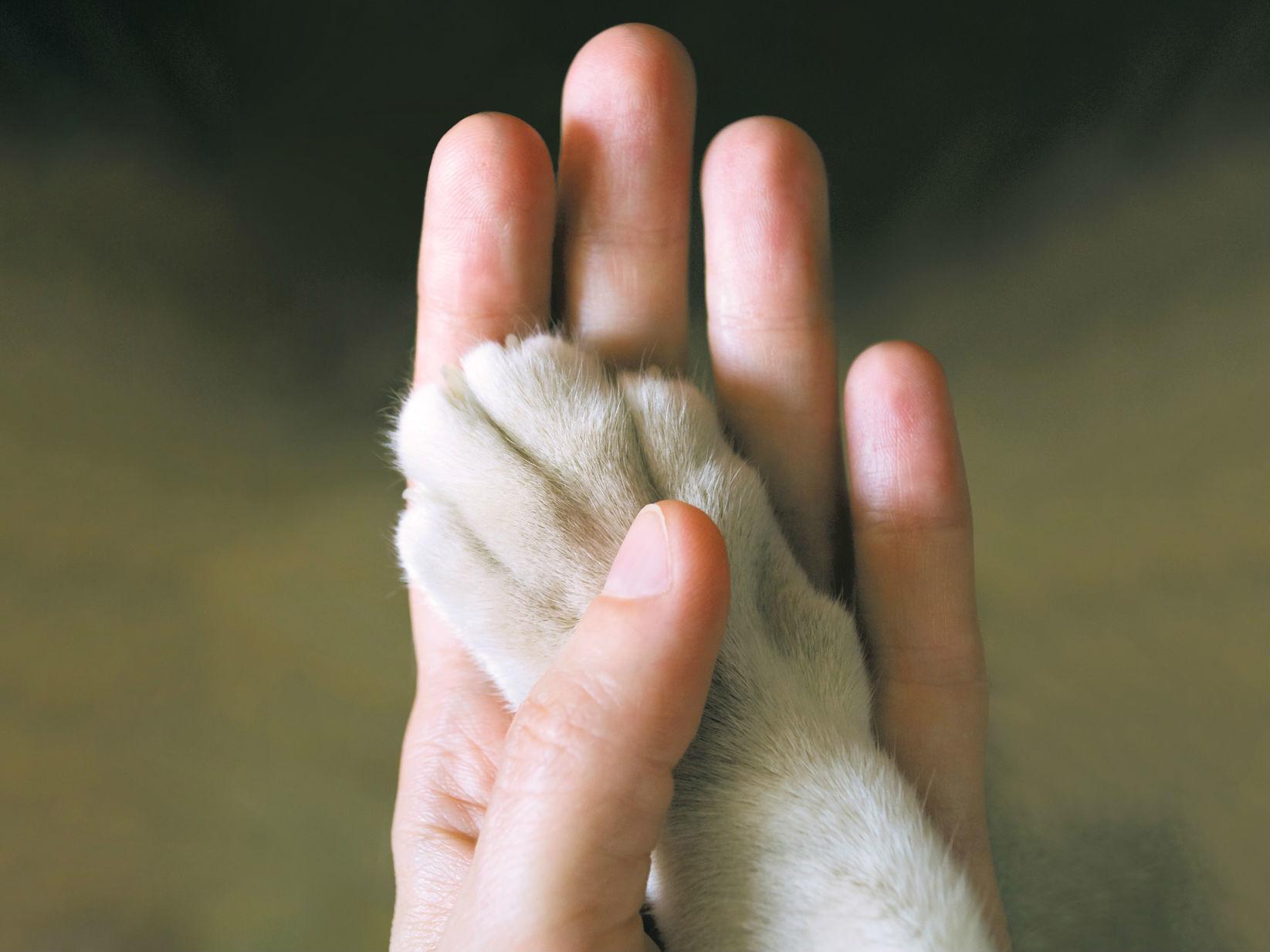 Protección de los animales