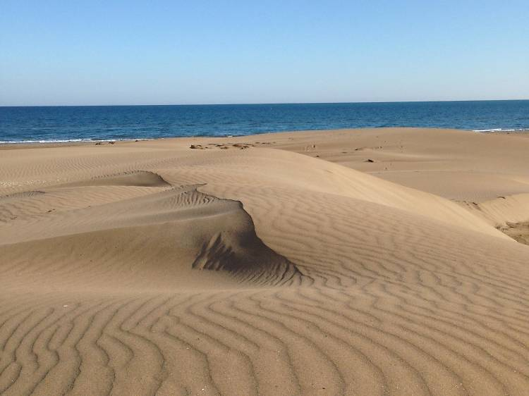 Playa del Fangar (Delta del Ebro)