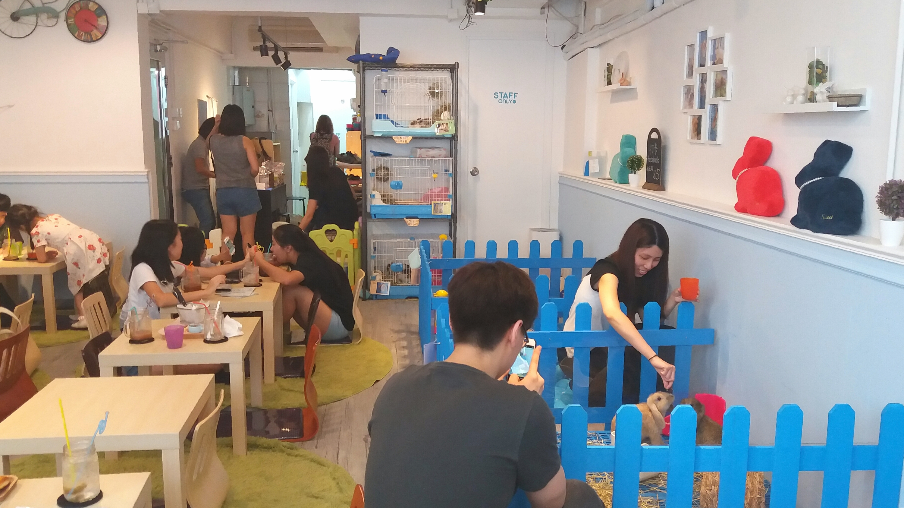It's happened: Hong Kong's first rabbit café opens in Causeway Bay