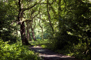 Wild thing: 14 lovely green spaces in London