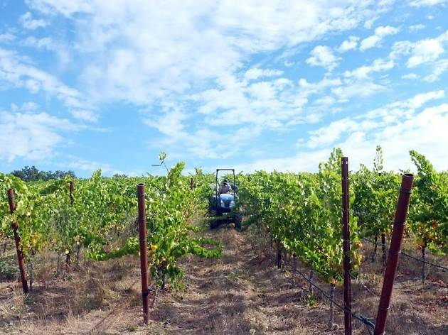 The best wineries in Sonoma