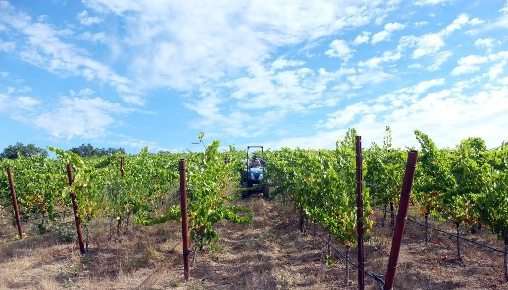 The best Sonoma wineries