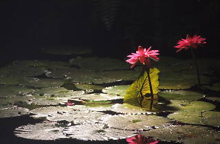 夢の島熱帯植物館夜間開館2016