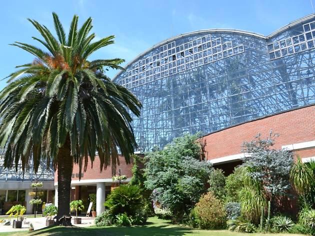 熱帯植物館1