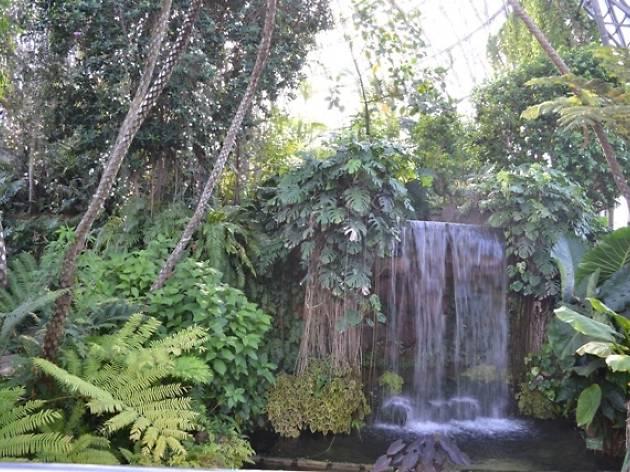 熱帯植物館2