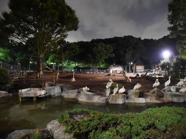 Summer Nights at Tama Zoo