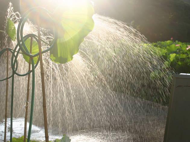 蓮シャワー