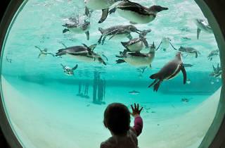 penguins, london zoo