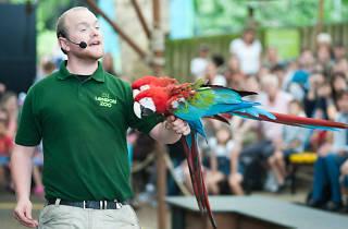 parrot, london zoo