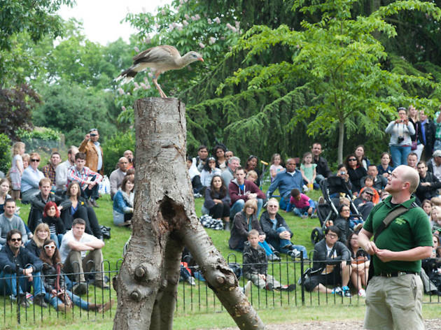 bird, london zoo
