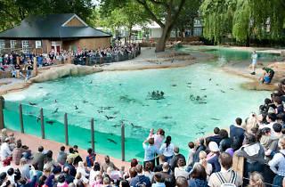 penguin beach, london zoo