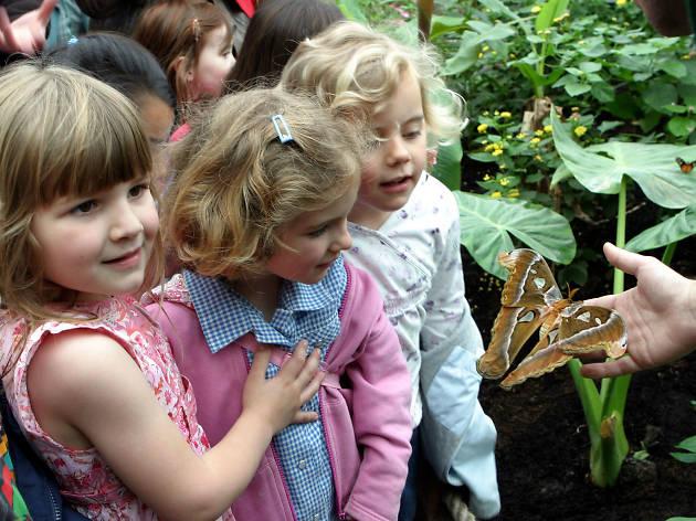 butterfly, london zoo