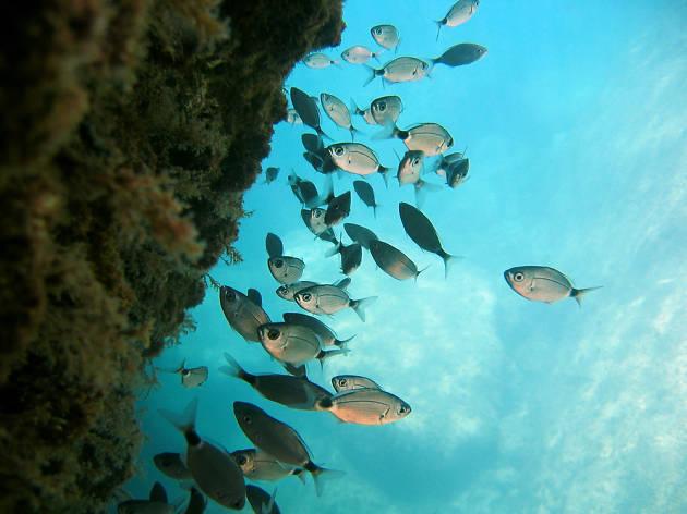Platges de la Costa Brava per fer snorkel